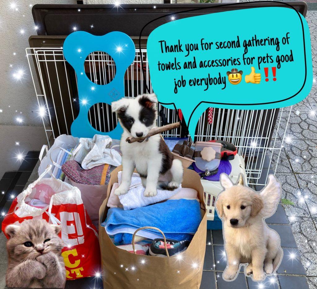 えひめイヌ・ネコの会さんにタオル・犬猫用品を寄付しました!