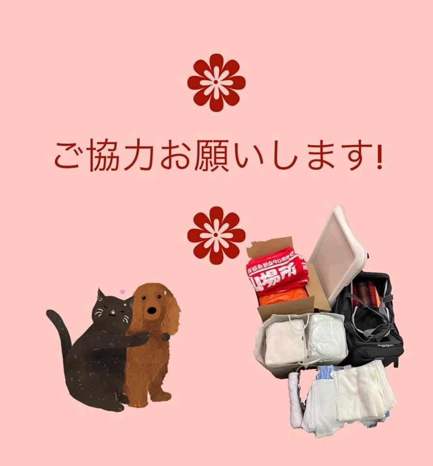 えひめイヌ・ネコの会さんにタオル・犬猫用品を寄付しました!~第2弾~